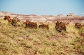 Morceaux de troncs pétrifiés et badlands en arrière-pland dans Petrified Forest National Park, Arizona