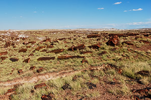 Petrified Forest National Park / Painted Desert