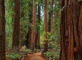 Plus hauts arbres du monde dans Redwood National Park, Californie