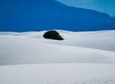 Un arbre perdu au milieu des dunes blanches de gypse de White Sands, au Nouveau-Mexique