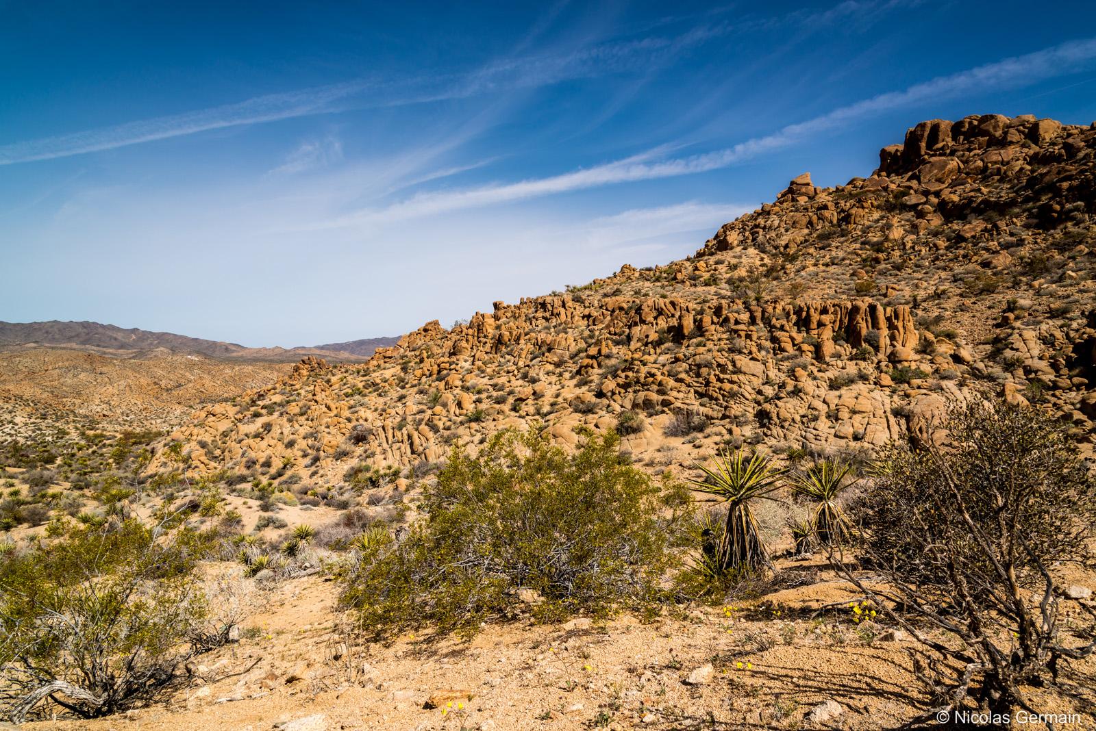 Paysage de Joshua Tree à Mastodon Peak