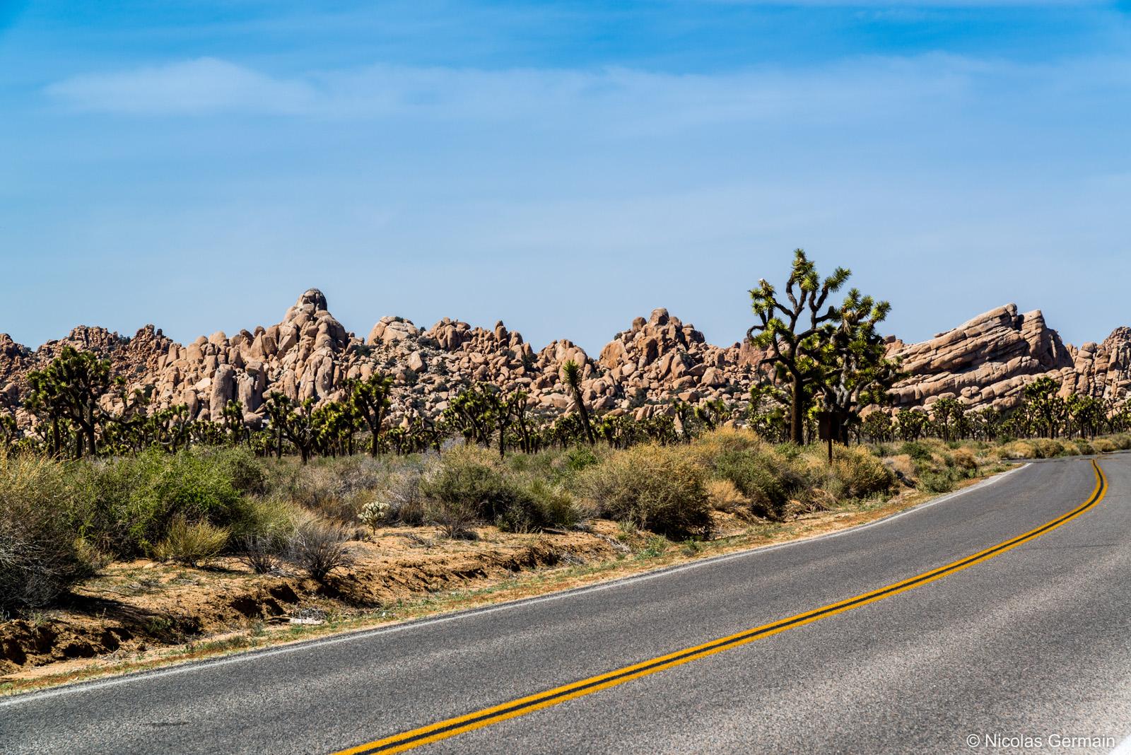 Barrière rocheuse massive et arbres de Josué au bord de la route principale de Joshua Tree National Park