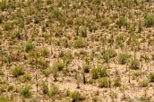 Désert de cactus saguaro dans Saguaro National Park, Arizona