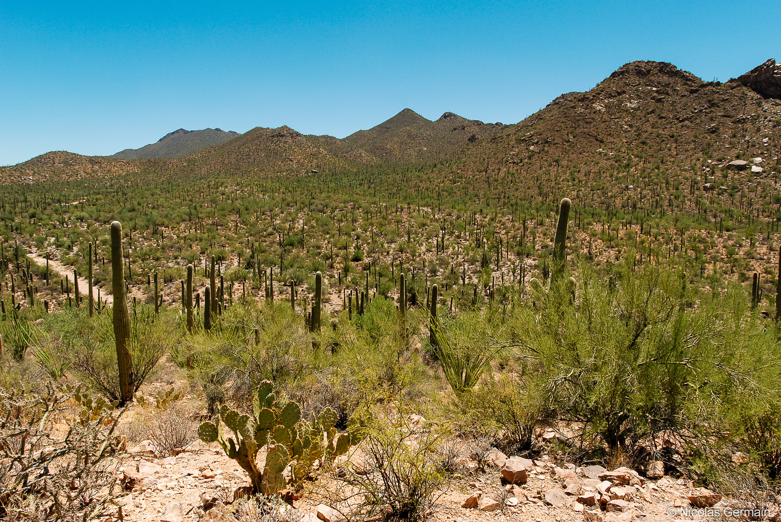 saguaro-valley-view