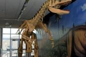 Squelette de dinosaure dans Dinosaur National Monument, section Utah
