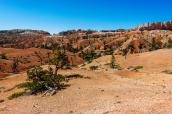 Paysage semi-aride sur le chemin de randonnée Fairyland Loop à Bryce Canyon