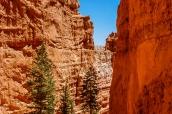 Descente au milieu des hoodoos et des parois rocheuses de Bryce Canyon