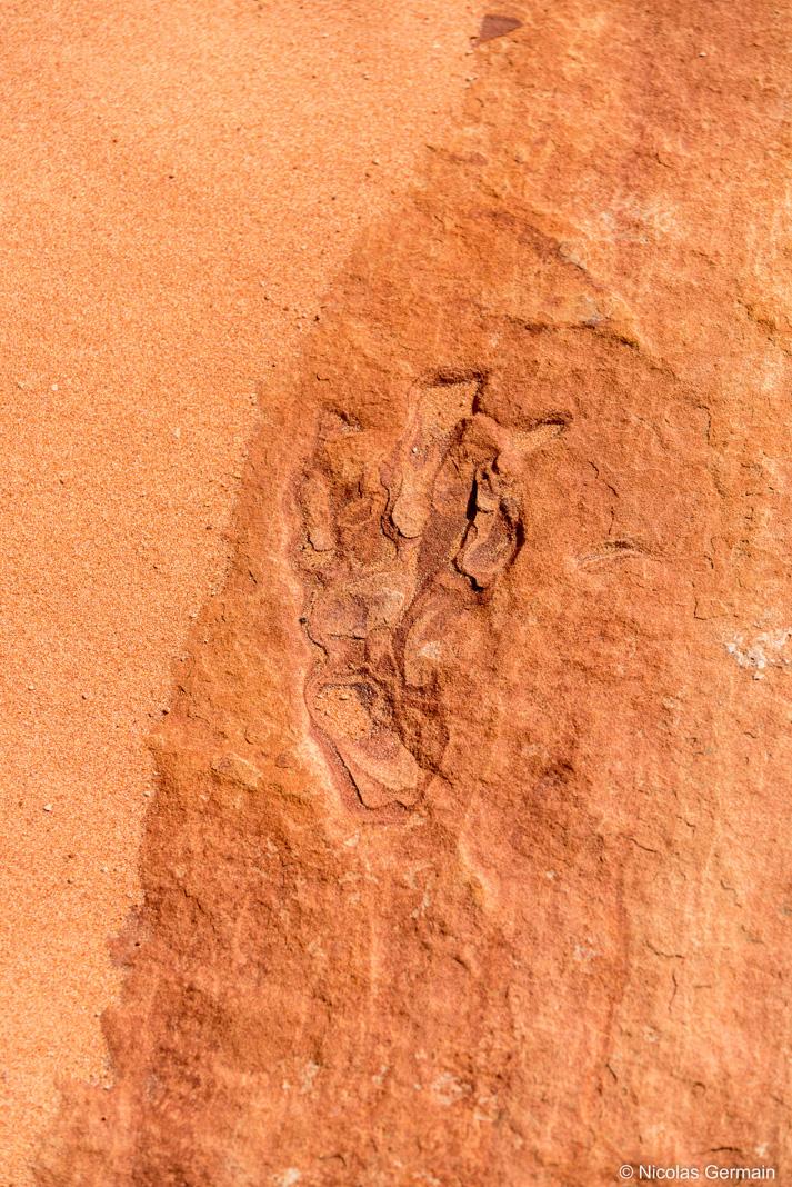 Empreinte fossilisée de dinosaure dans Coyote Buttes South, Arizona