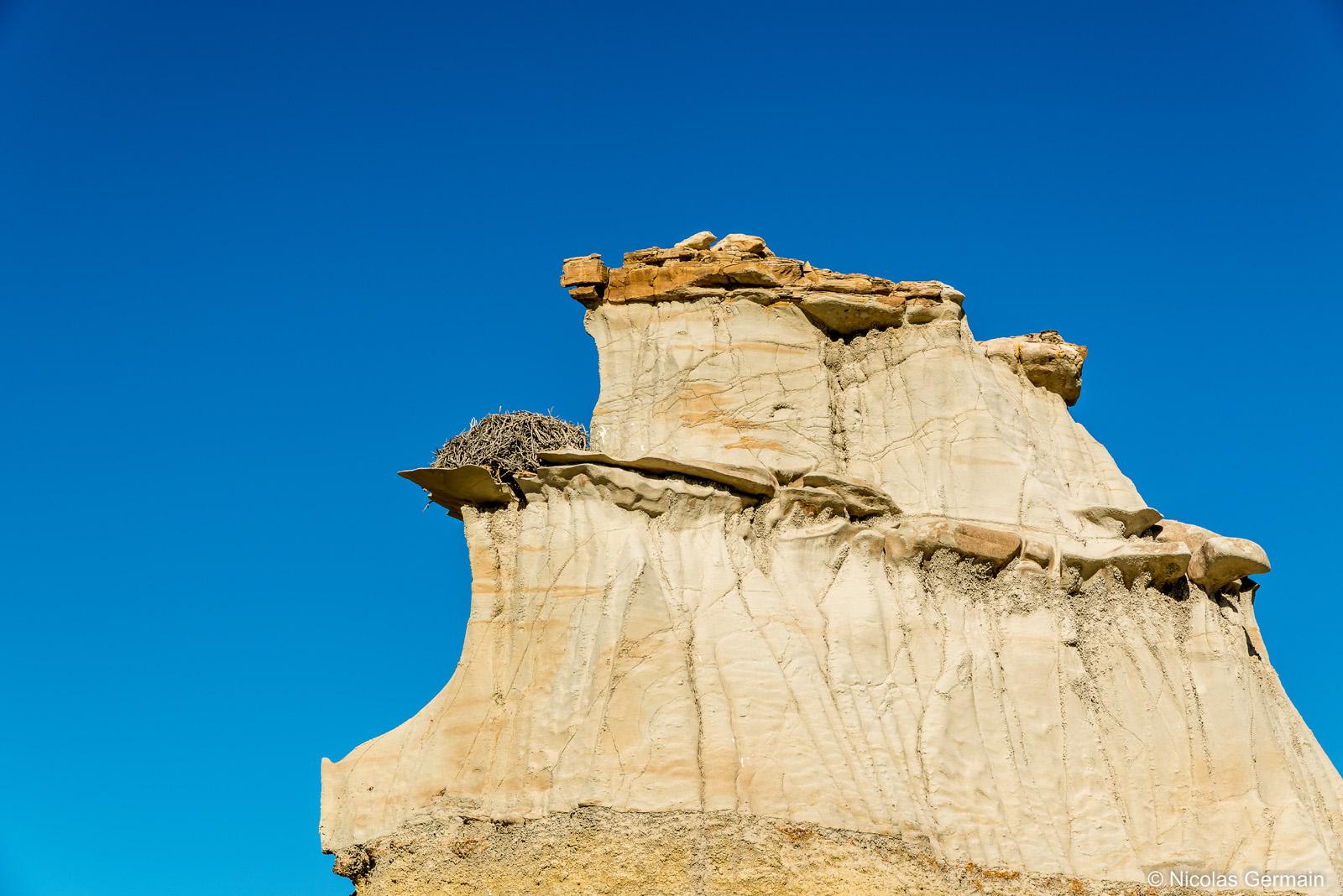 Nid d'aigle en haut d'un rocher de Bisti Wilderness