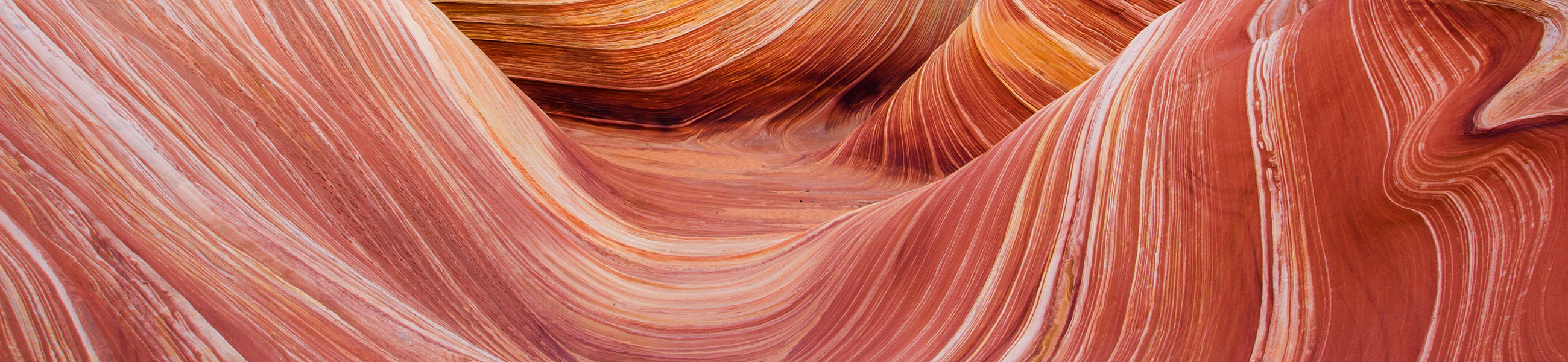 The Wave dans North Coyote Buttes