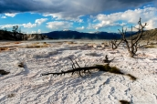 Concrétions calcaires de Mammoth Hot Springs au nord de Yellowstone National Park, Wyoming