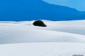 Un arbre perdu dans les dunes de White Sands, Nouveau-Mexique