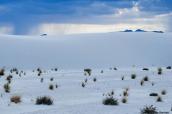 Certaines plantes parviennent à pousser au milieu du désert de White Sands