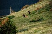 La faune de Rocky Mountain National Park est très riches de cervidés