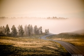 Brouillard matinal sur la route dans Yellowstone National Park, Wyoming