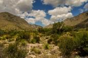 Désert semi-aride et montagnes de Guadalupe Mountains National Park, Texas