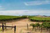 Collines et vignes d'une exploitation viticole de la Sonoma Valley, près de la Napa Valley, à une heure de San Francisco