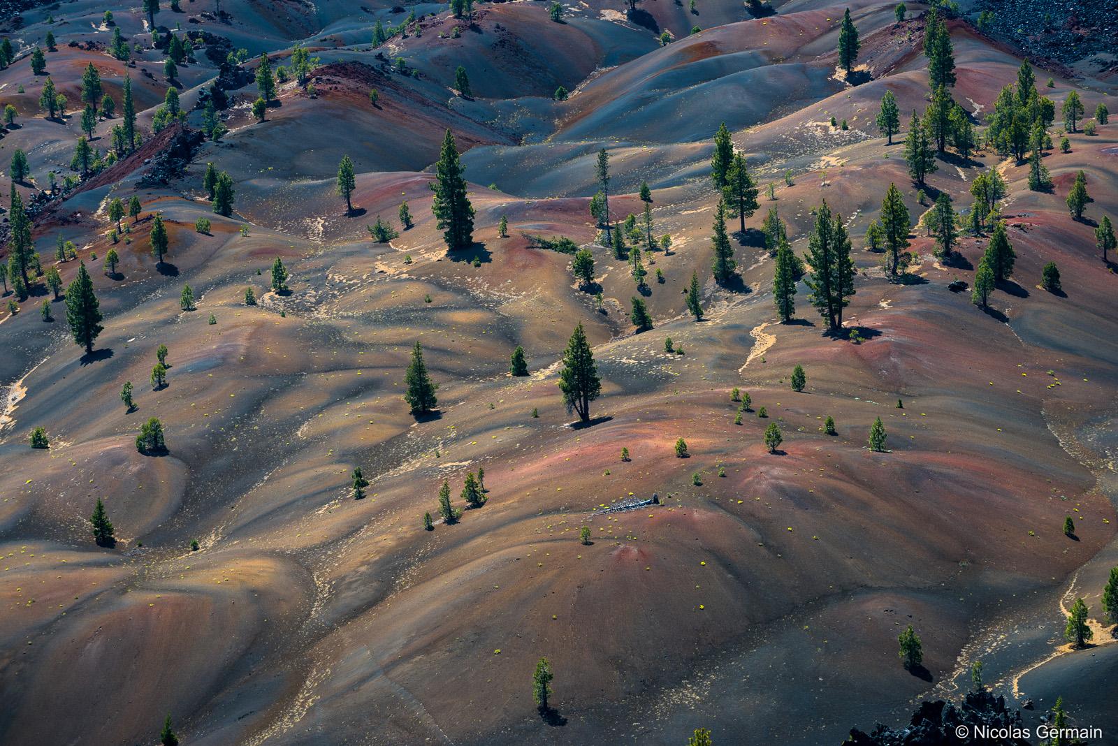 Les Pins parviennent à pousser au milieu des dunes colorées de Painted Dunes, Lassen Volcanic National Park