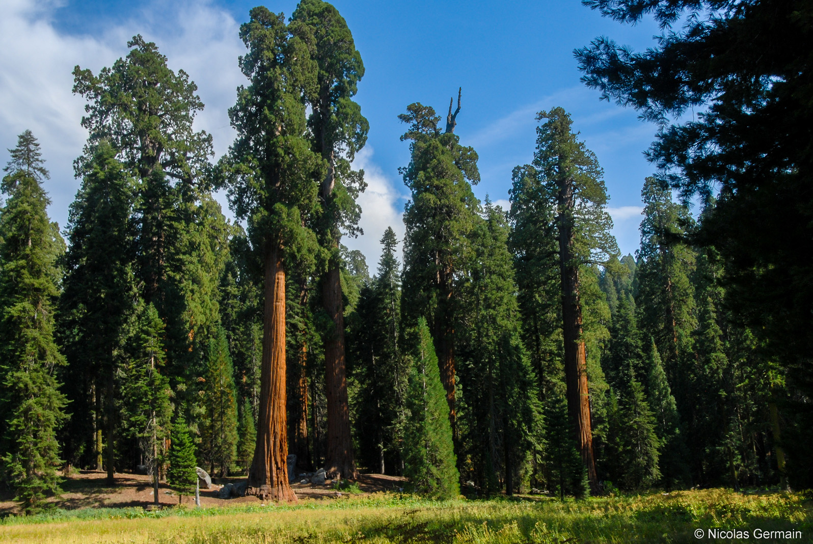 sequoia-big-trees-trail