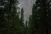 Falaise de El Capitan vue de la route, Yosemite National Park
