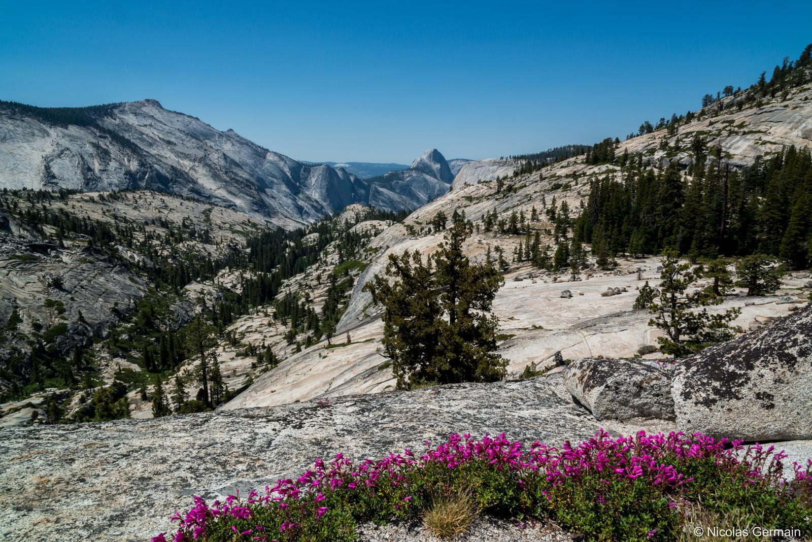 Paysage de Yosemite National Park et Half Dome dans le fond vus de Olmsted Point, Californie