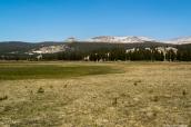 Prairies de Tuolumne Meadows près de la sortie est de Yosemite National Park, Californie