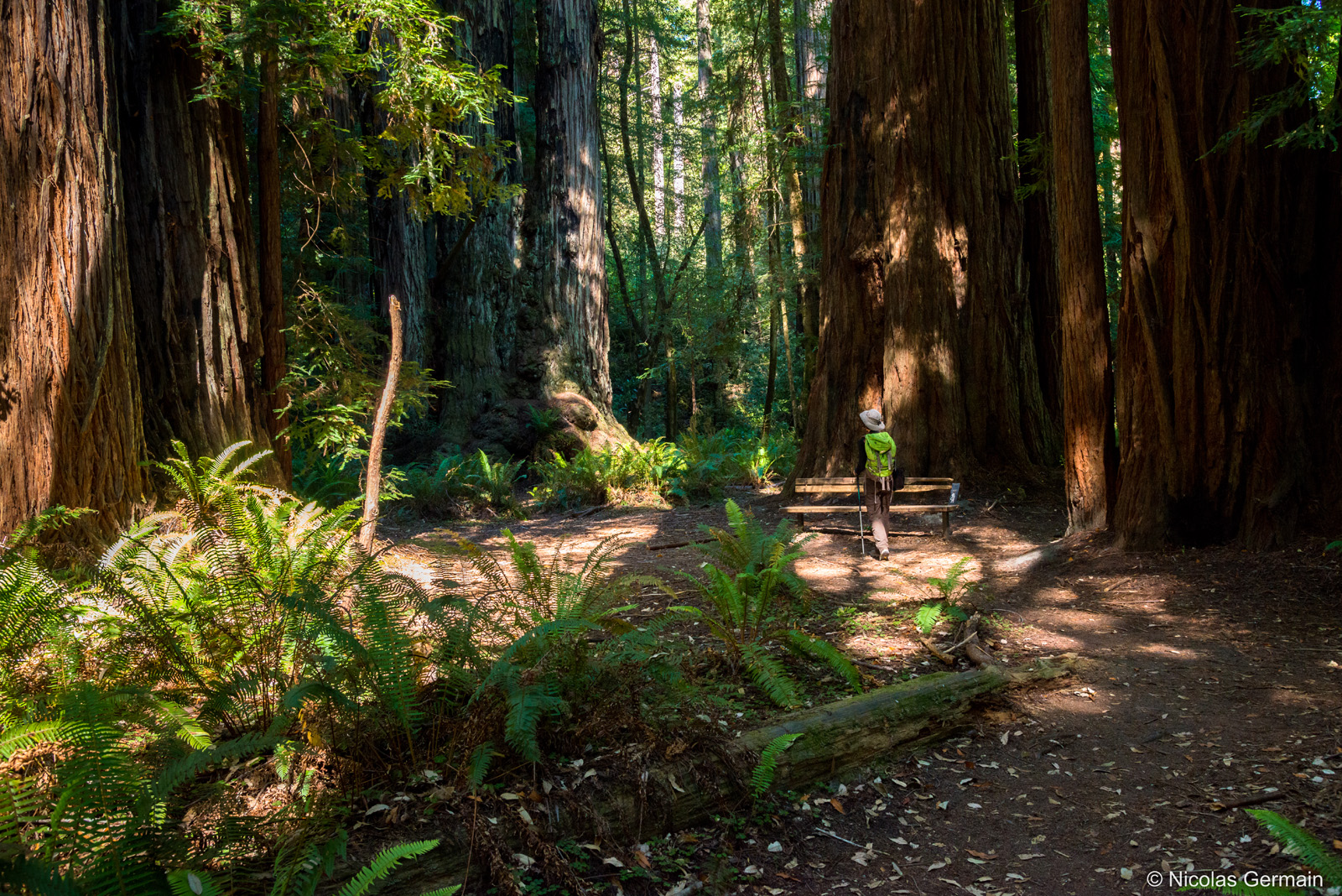 redwood-tall-trees-trail