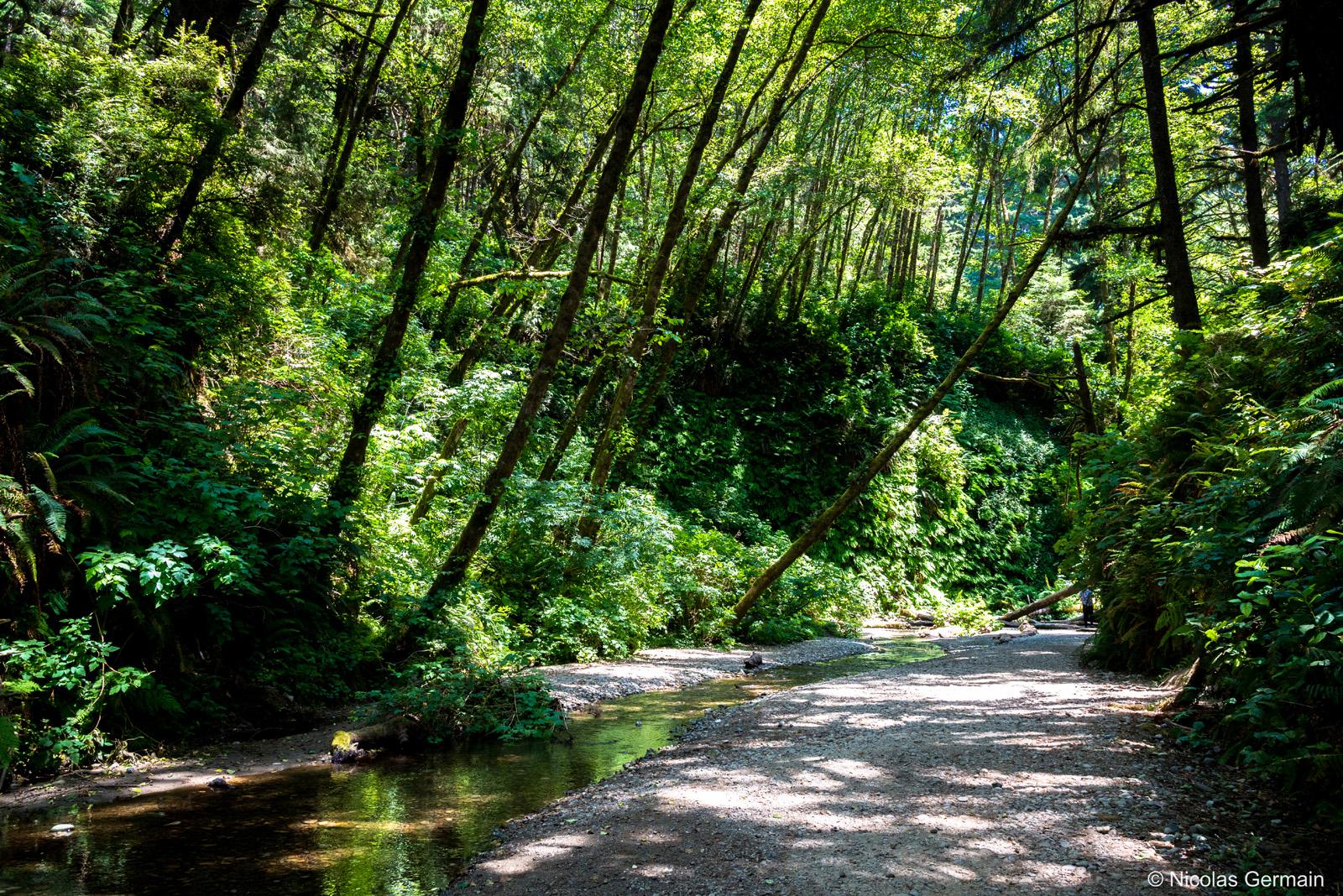 Fern Canyon dans Prairie Creek Redwoods State Park, Californie