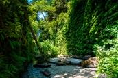 Le verdoyant Fern Canyon, Prairie Creek Redwoods State Park