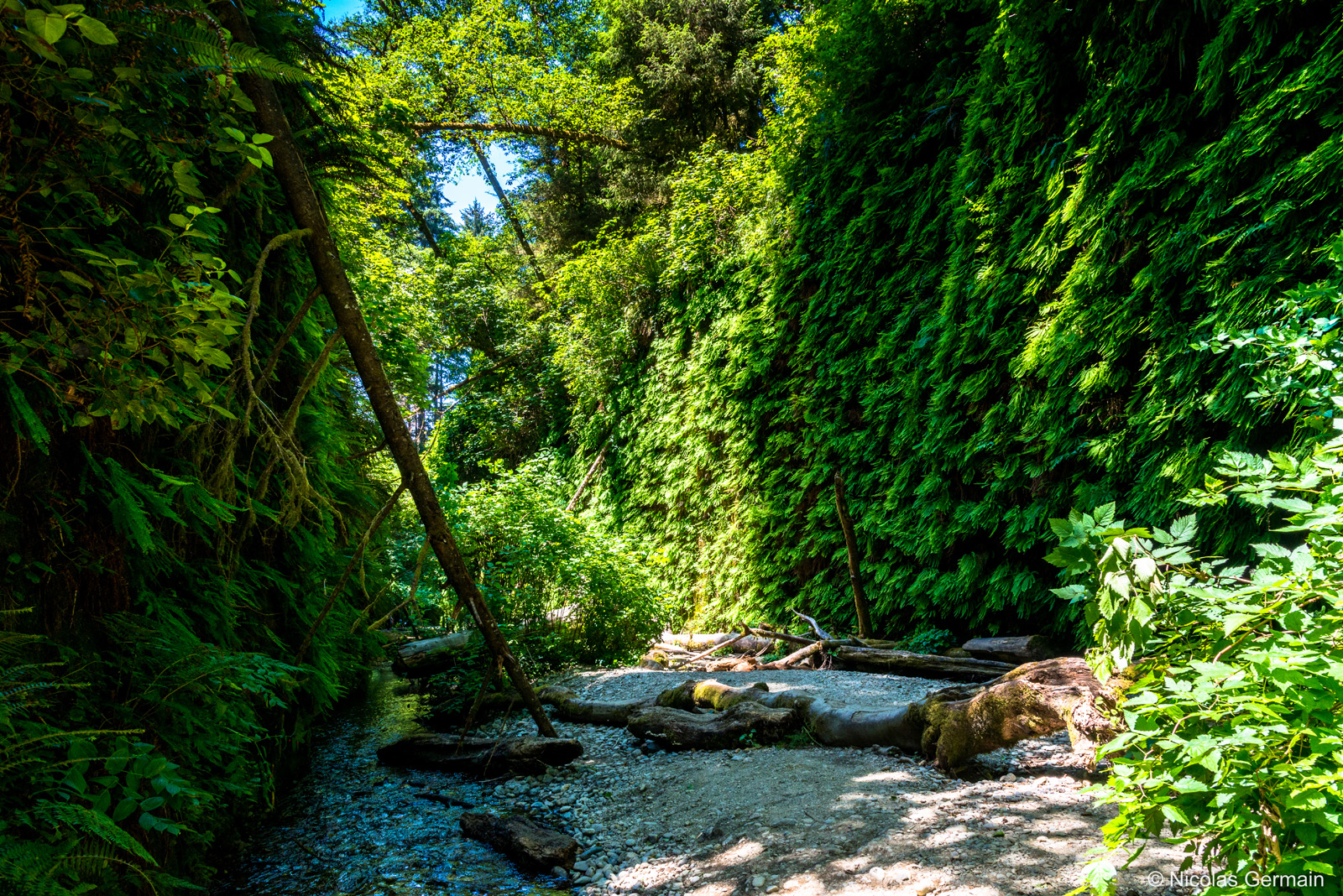 redwood-fern-canyon-prairie-creek