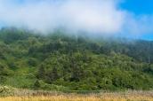 Forêt dense au sud de Redwood National Park, au bord de l'océan pacifique à Freshwater Lagoon