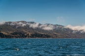 Paysage de la côte pacifique à Monterey vu de bateau