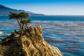 Cyprès esseulé sur la route 17 mile drive à Monterey, Californie