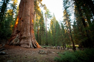 Sequoia et Kings Canyon National Parks