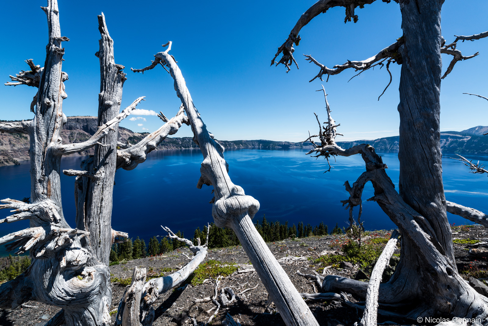 Arbres morts au sommet de Wizard Island, Crater Lake National Park
