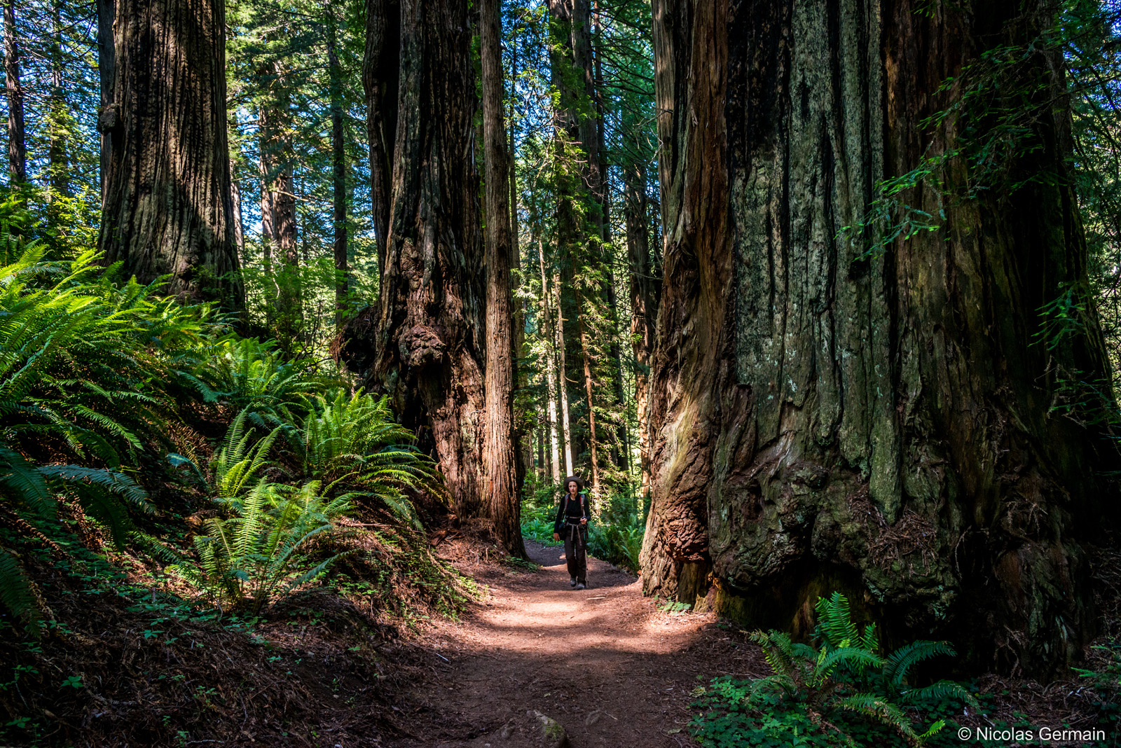 redwood-james-irvine-trail
