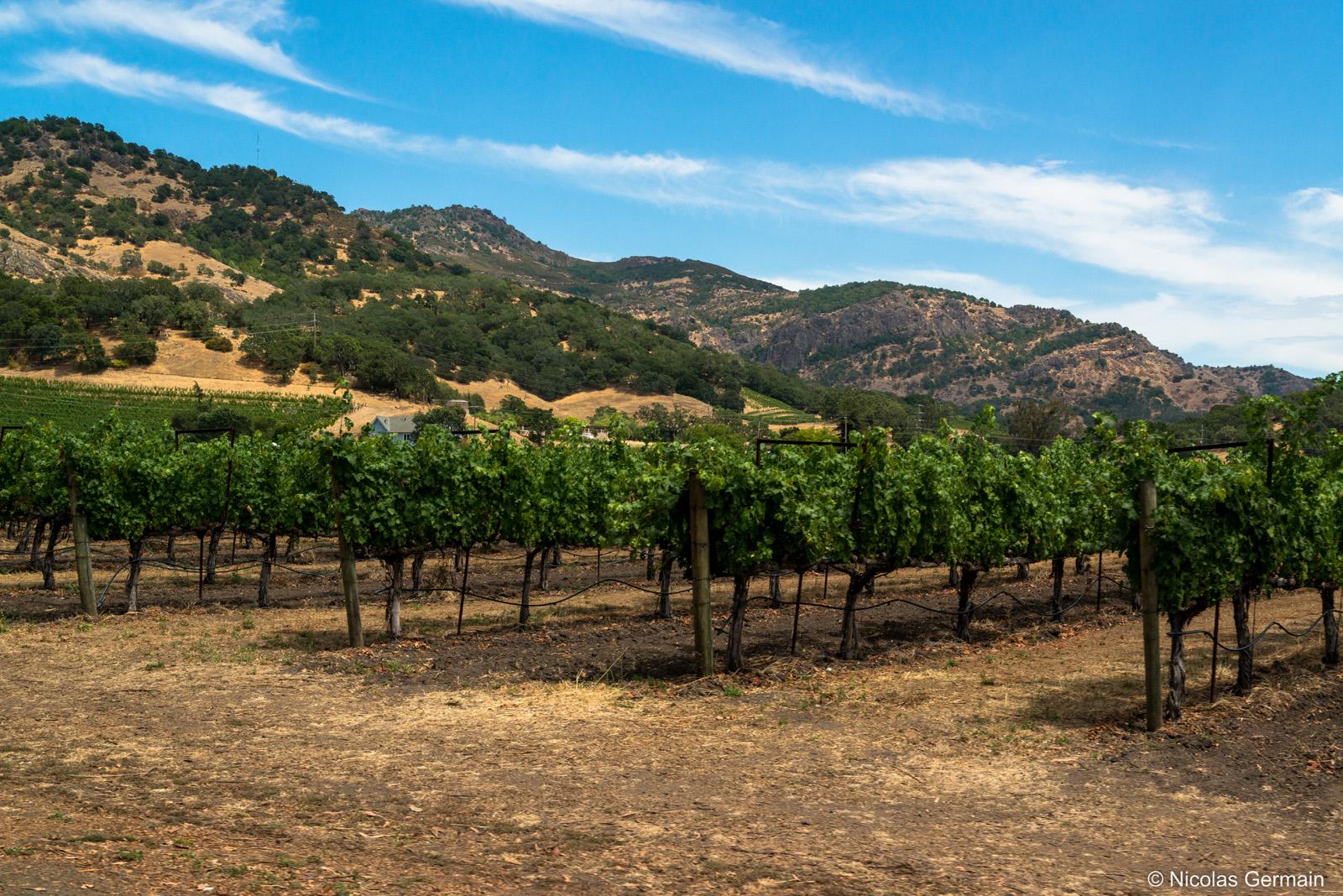 Collines et vignes de la Napa Valley, Californie