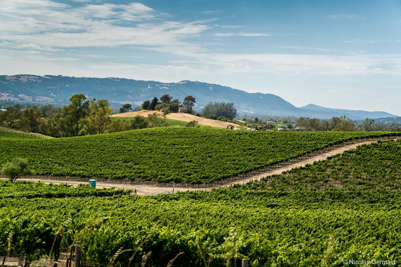 Vignes entre la Sonoma Valley et la Napa Valley, Californie