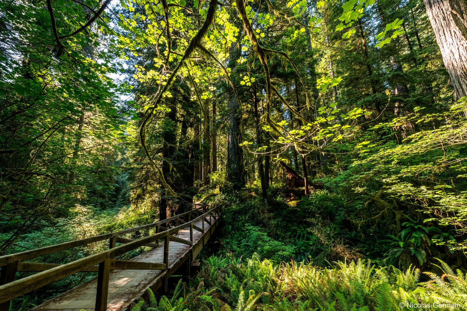 Un pont enjambe un petit ruisseau sur James Irvine Trail, Prairie Creek Redwoods State Park