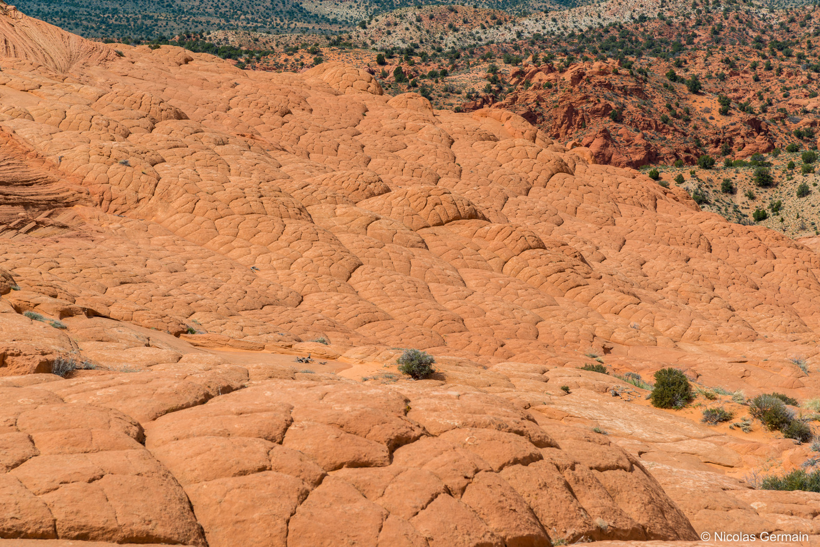 De nombreux brainrocks, roches en forme de cerveaux, sont visibles à Edmaier's Secret, dans le sud de l'Utah