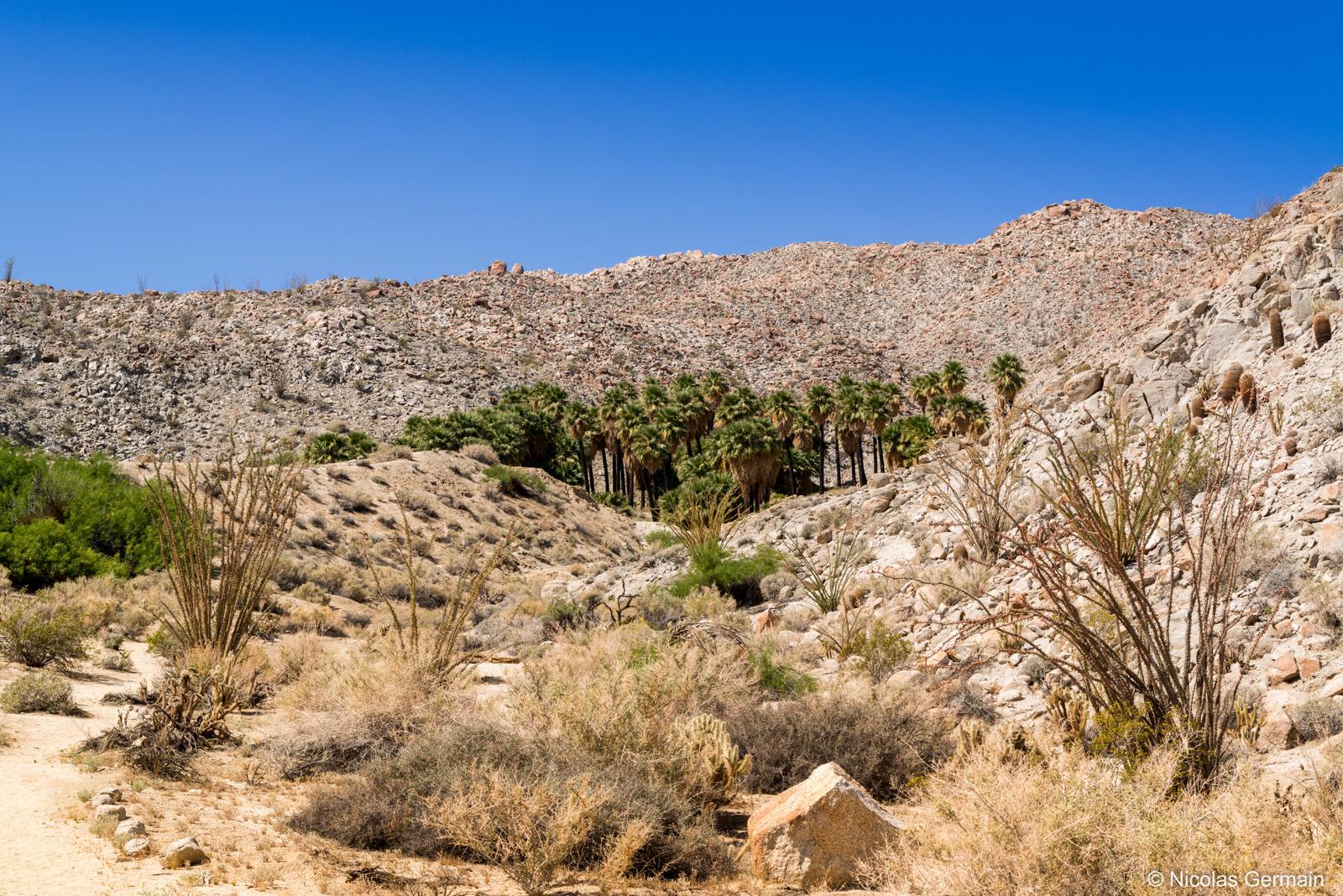 Oasis de Palm Bowl dans Anza Borrego State Park, Californie