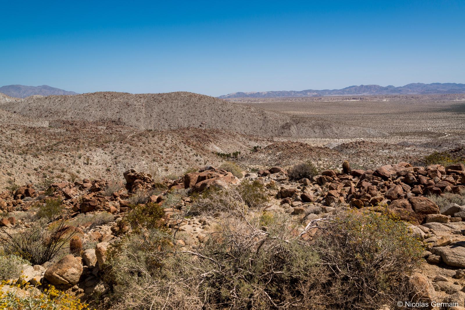 Désert d'Anza Borrego et petite oasis près de Palm Canyon Trail, Californie