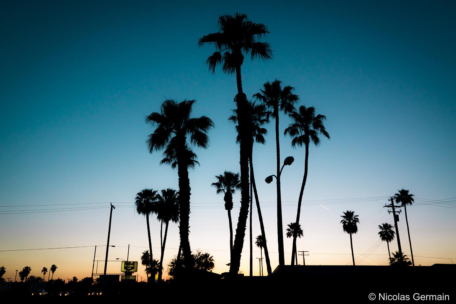 Palmiers au coleil couchant à Blythe, dans le sud-est de la Californie
