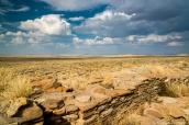 Steppe d'altitude sur la mesa de Pueblo Alto Trail à Chaco Culture, Nouveau-Mexique