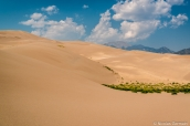 La végétation parvient à pousser au milieu du sable des dunes de Great Sand Dunes, Colorado