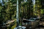 Début de la randonnée de Baker Creek dans une forêt de pins et de trembles, Great Basin National Park