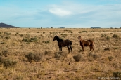 Chevaux dans la plaine menant à Tatahatso dans le nord de l'Arizona