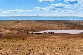 Des vaches et des chevaux viennent boire dans ce réservoir situé sur la piste allant à Tatahatso, Arizona