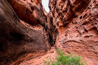 jenny-canyon-trail