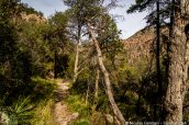 Sentier de randonnée Sarah Deming Trail, Chiricahua